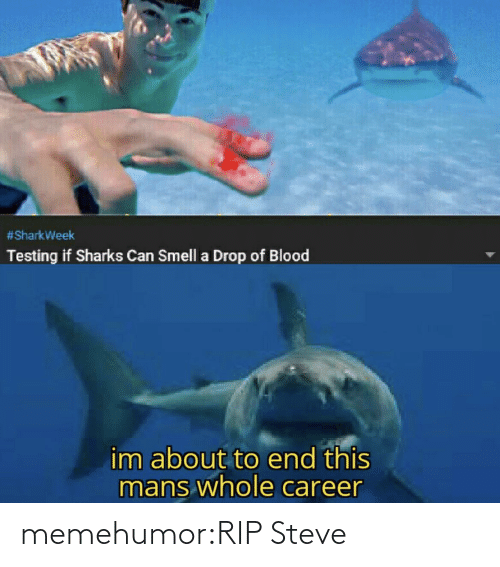 career:  #SharkWeek  Testing if Sharks Can Smell a Drop of Blood  im about to end this  mans whole career memehumor:RIP Steve