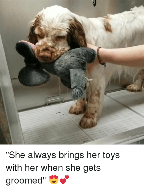 "Toys, Her, and She: ""She always brings her toys with her when she gets groomed"" 😍💕"