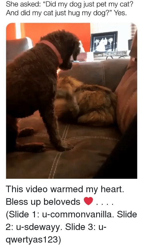 "Bless Up, Memes, and Heart: She asked: ""Did my dog just pet my cat?  And did my cat just hug my dog?"" Yes. This video warmed my heart. Bless up beloveds ❤️ . . . . (Slide 1: u-commonvanilla. Slide 2: u-sdewayy. Slide 3: u-qwertyas123)"