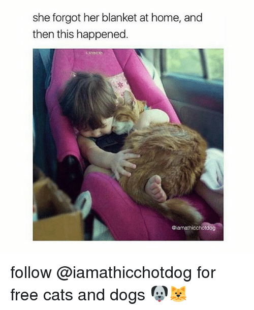 Cats, Dogs, and Free: she forgot her blanket at home, and  then this happened  coMo  @iamathicchotdog follow @iamathicchotdog for free cats and dogs 🐶🐱