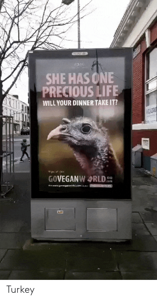 Life, Precious, and Turkey: SHE HAS ONE  PRECIOUS LIFE  WILL YOUR DINNER TAKE IT?  CADW  GOVEGANWRLD  no  .om  www.govep d.comm Turkey