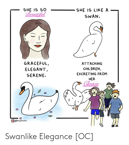 So Beautiful: SHE IS SO  Beautiful  SHE IS LIKE A  SWAN.  GRACEFUL,  ATTACKING  CHIL DREN,  ELEGANT,  EXCRETING FROM  SERENE.  HER  Cloaca  O@BigMither Swanlike Elegance [OC]