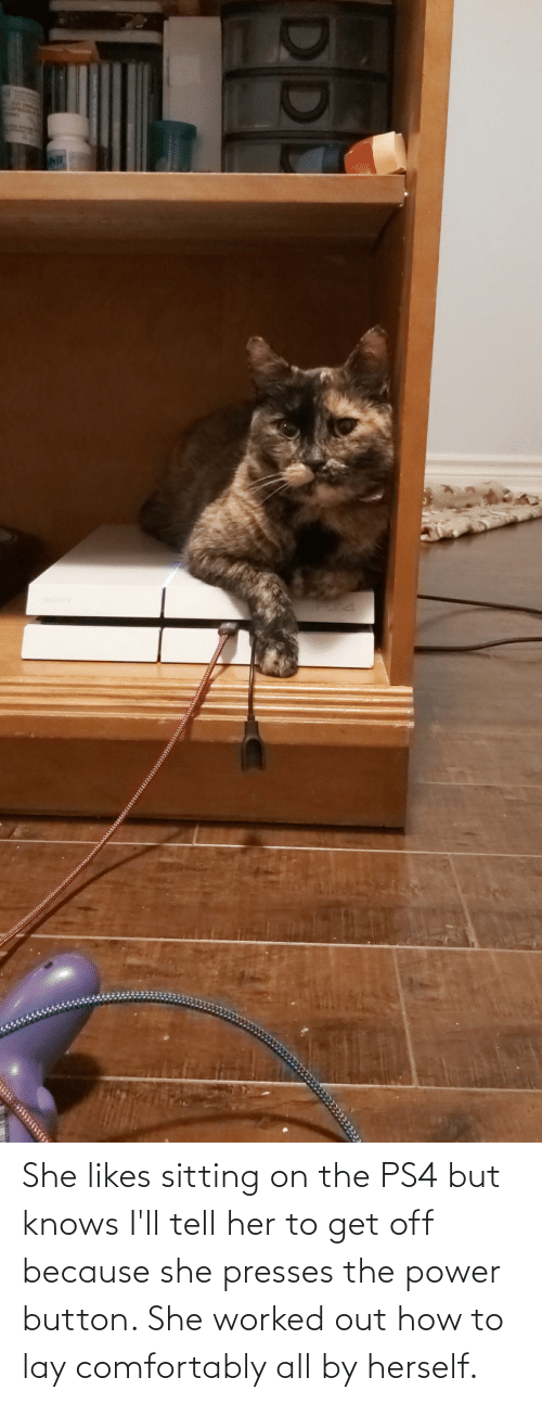 Herself: She likes sitting on the PS4 but knows I'll tell her to get off because she presses the power button. She worked out how to lay comfortably all by herself.