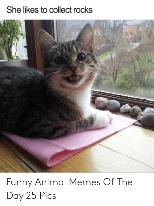 funny animal memes: She likes to collect rocks Funny Animal Memes Of The Day 25 Pics