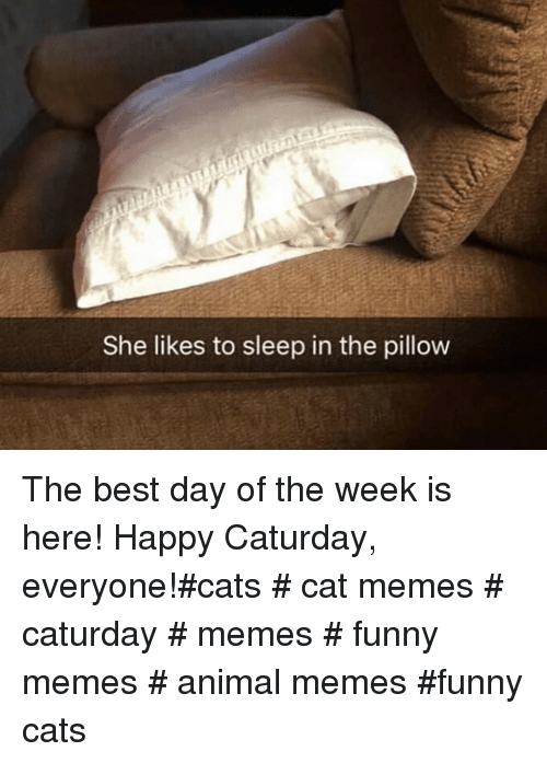 Cats, Caturday, and Funny: She likes to sleep in the pillow The best day of the week is here! Happy Caturday, everyone!#cats # cat memes # caturday # memes # funny memes # animal memes #funny cats