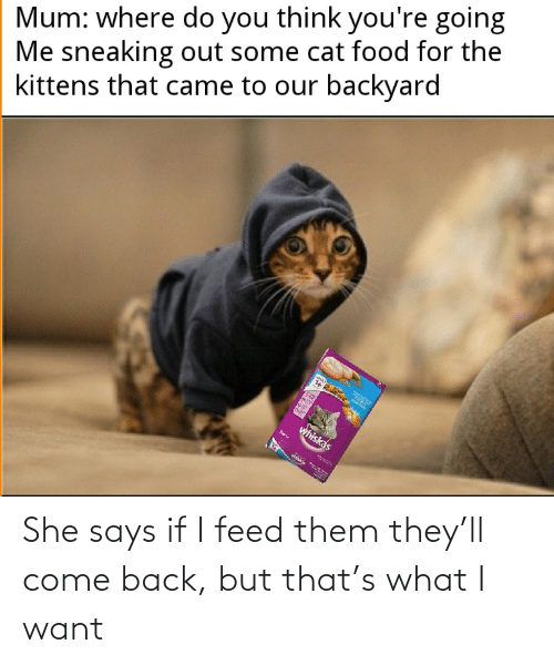 come back: She says if I feed them they'll come back, but that's what I want