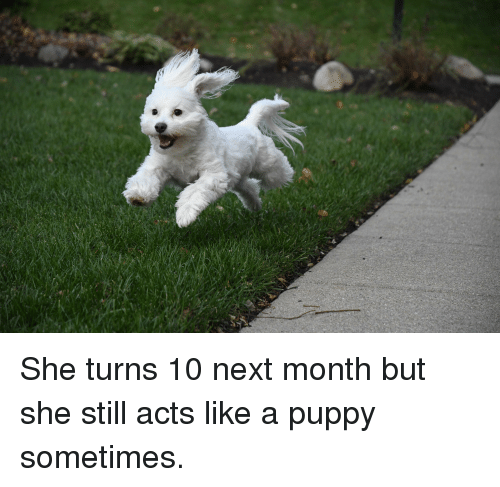 Puppy, Next, and She