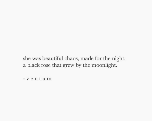 Beautiful, Black, and Rose: she was beautiful chaos, made for the night.  a black rose that grew by the moonlight.  - ve ntum