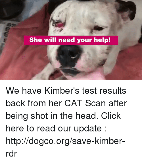 cat scan: She will need your help! We have Kimber's test results back from her CAT Scan after being shot in the head. Click here to read our update : http://dogco.org/save-kimber-rdr