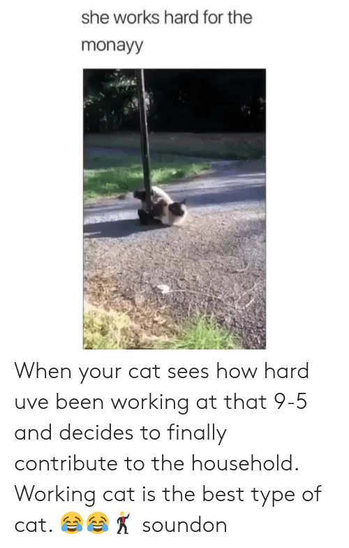 Best, Girl Memes, and Been: she works hard for the  monayy When your cat sees how hard uve been working at that 9-5 and decides to finally contribute to the household. Working cat is the best type of cat. 😂😂🕺🏼 soundon