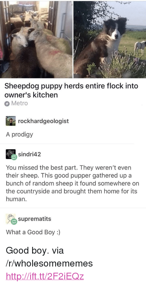 "Best, Good, and Home: Sheepdog puppy herds entire flock into  owner's kitchen  Metro  rockhardgeologist  A prodigy  sindri42  You missed the best part. They weren't even  their sheep. This good pupper gathered up a  bunch of random sheep it found somewhere on  the countryside and brought them home for its  human.  suprematits  What a Good Boy :) <p>Good boy. via /r/wholesomememes <a href=""http://ift.tt/2F2iEQz"">http://ift.tt/2F2iEQz</a></p>"