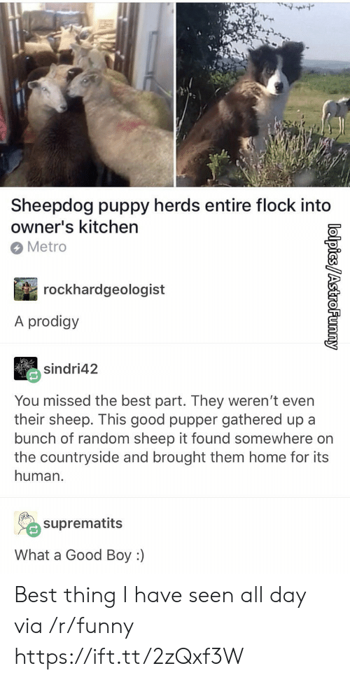 Funny, Best, and Good: Sheepdog puppy herds entire flock into  owner's kitchen  Metro  rockhardgeologist  A prodigy  sindri42  You missed the best part. They weren't even  their sheep. This good pupper gathered up a  bunch of random sheep it found somewhere on  the countryside and brought them home for its  human.  suprematits  What a Good Boy :) Best thing I have seen all day via /r/funny https://ift.tt/2zQxf3W