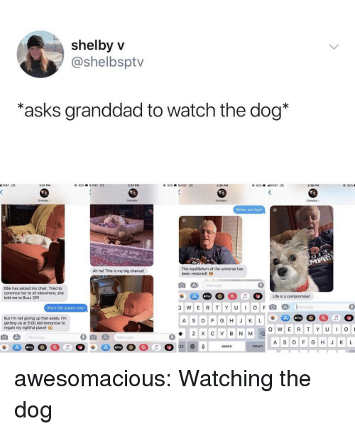 Tumblr, Queen, and Grandpa: shelbyV  @shelbsptv  asks granddad to watch the dog*  AT&T LTE  2:37 PM  2:37 PM  92%  l AT&T  UE  2:38 PM  2:38 PM  92%  Grandps  Grandpa  Grandpa  randpa  Better act fast  The equilibrium of the universe has  been restored  Ah ha! This is my big chance!  0  Ellie has seized my chair. Tried to  convince her to sit elsewhere, she  told me to Buzz Off!  Pay  She's the queen noW!  wERTYUIOFl@]  D)  1..tessage  0  But I'm not giving up that easily. I'm  getting up at 5:00 AM tomorrow to  regain my rightful place!  Pay  A S DF GHJ K L  A S DF GHJ K L  Pay  Pay  return awesomacious:  Watching the dog