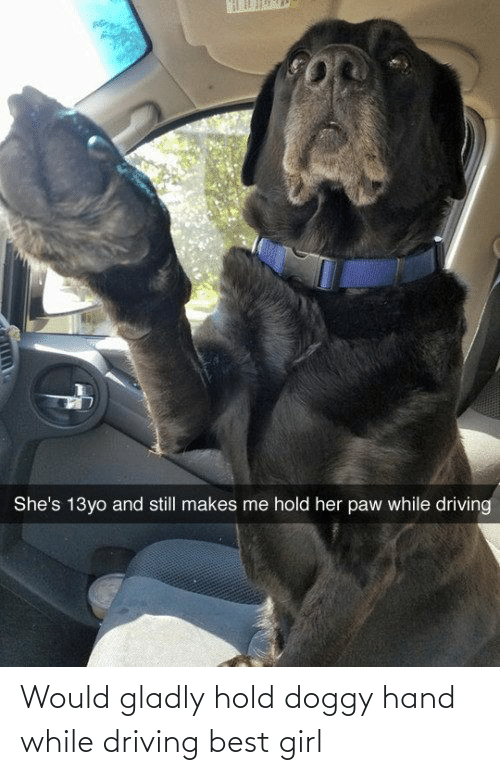 13Yo: She's 13yo and still makes me hold her paw while driving Would gladly hold doggy hand while driving best girl