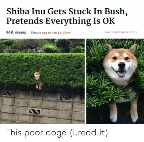 Bored, Doge, and Panda: Shiba Inu Gets Stuck In Bush,  Pretends Everything Is OK  44K views  5 hours ago by Low Lai Chow  Like Bored Panda on FB: This poor doge (i.redd.it)
