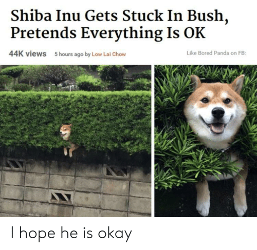 Bored, Panda, and Okay: Shiba Inu Gets Stuck In Bush,  Pretends Everything Is OK  44K views  5 hours ago by Low Lai Chow  Like Bored Panda on FB I hope he is okay