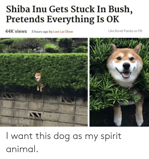 Bored, Panda, and Animal: Shiba Inu Gets Stuck In Bush,  Pretends Everything Is OK  44K views  5 hours ago by Low Lai Chow  Like Bored Panda on FB I want this dog as my spirit animal.