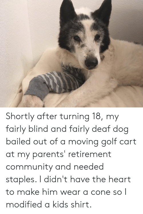 Bailed Out: Shortly after turning 18, my fairly blind and fairly deaf dog bailed out of a moving golf cart at my parents' retirement community and needed staples. I didn't have the heart to make him wear a cone so I modified a kids shirt.