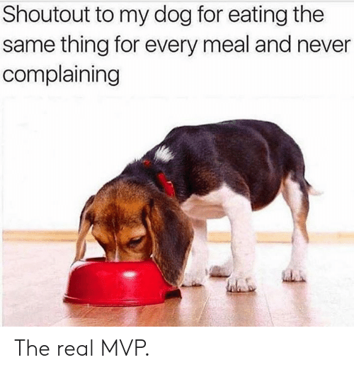 The Real, Never, and Dog: Shoutout to my dog for eating the  same thing for every meal and never  complaining The real MVP.