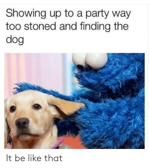 Be Like, Party, and Dog: Showing up to a party way  too stoned and finding the  dog It be like that