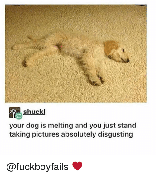 Dogs, Lyrics, and Pictures: shuck  your dog is melting and you just stand  taking pictures absolutely disgusting @fuckboyfails ❤️