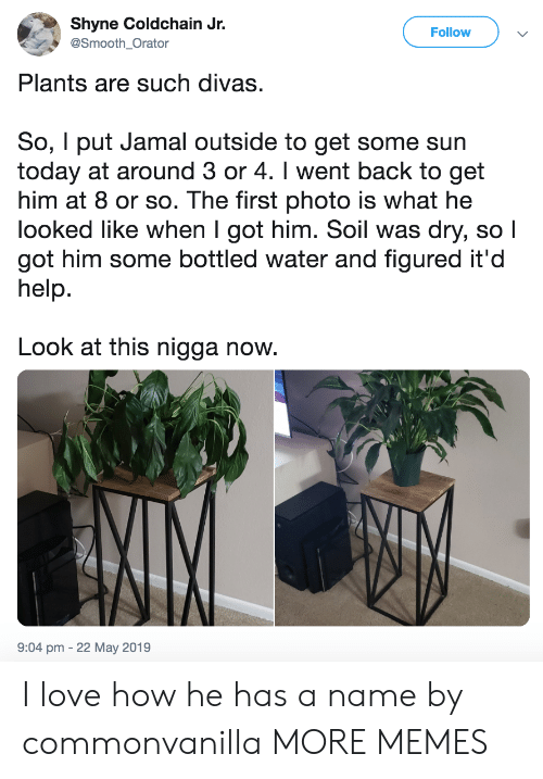 Dank, Love, and Memes: Shyne Coldchain Jr.  Follow  @Smooth Orator  Plants are such divas.  So, I put Jamal outside to get some sun  today at around 3 or 4. I went back to get  him at 8 or so. The first photo is what he  looked like when I got him. Soil was dry, so l  got him some bottled water and figured it'd  help.  Look at this nigga now.  9:04 pm -22 May 2019 I love how he has a name by commonvanilla MORE MEMES