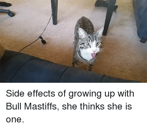 bull mastiff: Side effects of growing up with Bull Mastiffs, she thinks she is one.
