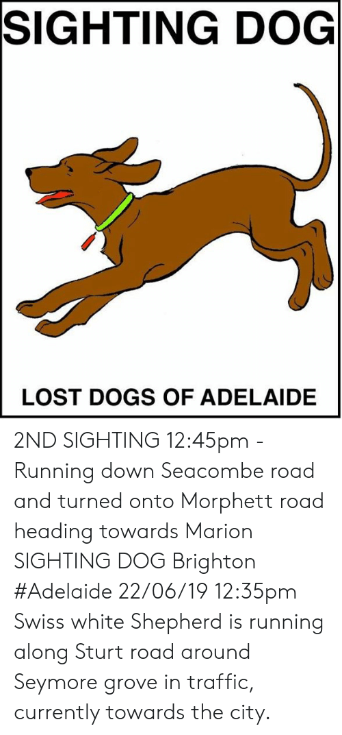 Dogs, Memes, and Traffic: SIGHTING DOG  LOST DOGS OF ADELAIDE 2ND SIGHTING 12:45pm - Running down Seacombe road and turned onto Morphett road heading towards Marion  SIGHTING DOG Brighton #Adelaide 22/06/19 12:35pm Swiss white Shepherd is running along Sturt road around Seymore grove in traffic, currently towards the city.
