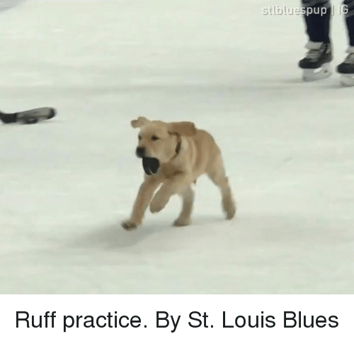 St Louis: silblue  pup Ruff practice.  By St. Louis Blues