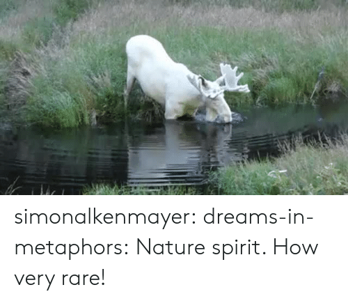 metaphors: simonalkenmayer:  dreams-in-metaphors: Nature spirit.  How very rare!