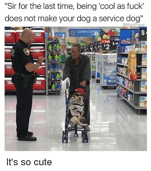 "Cute, Memes, and Cool: ""Sir for the last time, being 'cool as fuck'  does not make your dog a service dog""  @MasiPopal  Garden Cente r  LowUST  Sum  25 It's so cute"