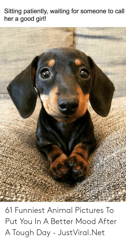 Mood, Animal, and Girl: Sitting patiently, waiting for someone to call  her a good girl! 61 Funniest Animal Pictures To Put You In A Better Mood After A Tough Day - JustViral.Net