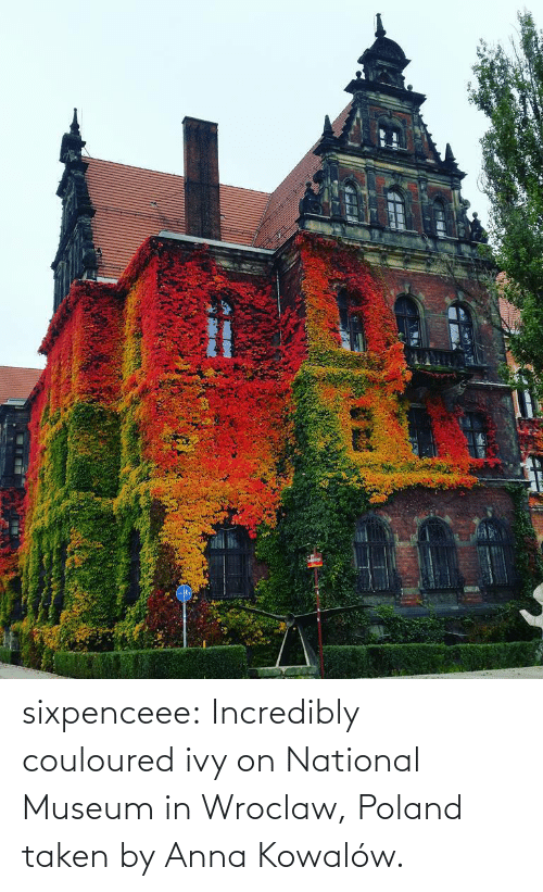 facebook.com: sixpenceee: Incredibly couloured ivy on  National Museum in Wroclaw, Poland taken by  Anna Kowalów.