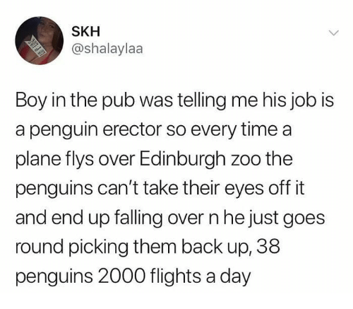 Memes, Penguin, and Penguins: SKH  @shalaylaa  Boy in the pub was telling me his job is  a penguin erector so every time a  plane flys over Edinburgh zoo the  penguins can't take their eyes off it  and end up falling over n he just goes  round picking them back up, 38  penguins 2000 flights a day