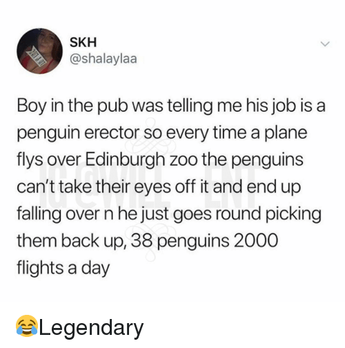 Memes, Penguin, and Penguins: SKH  @shalaylaa  Boy in the pub was telling me his job is a  penguin erector so every time a plane  flys over Edinburgh zoo the penguins  can't take their eyes off it and end up  falling over n he just goes round picking  them back up, 38 penguins 2000  flights a day 😂Legendary