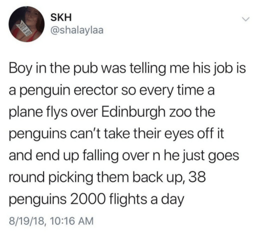 Penguin, Penguins, and Time: SKH  @shalaylaa  Boy in the pub was telling me his job is  a penguin erector so every time a  plane flys over Edinburgh zoo the  penguins can't take their eyes off it  and end up falling over n he just goes  round picking them back up, 38  penguins 2000 flights a day  8/19/18, 10:16 AM