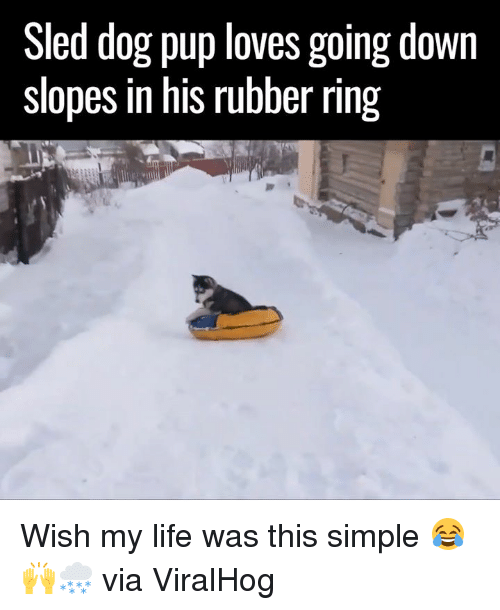 sledding: Sled dog pup loves going down  slopes in his rubber ring Wish my life was this simple 😂🙌🌨  via ViralHog