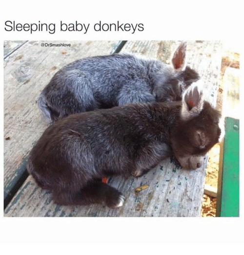 donkeys: Sleeping baby donkeys  Drsmashlove