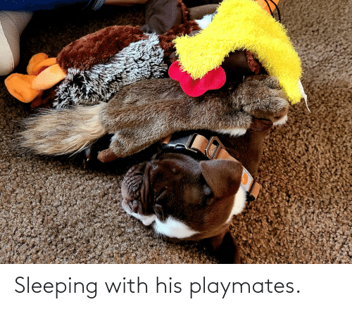 playmates: Sleeping with his playmates.