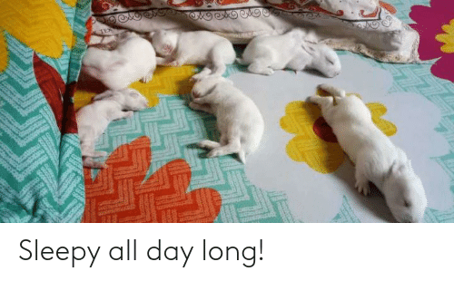 All Day Long: Sleepy all day long!