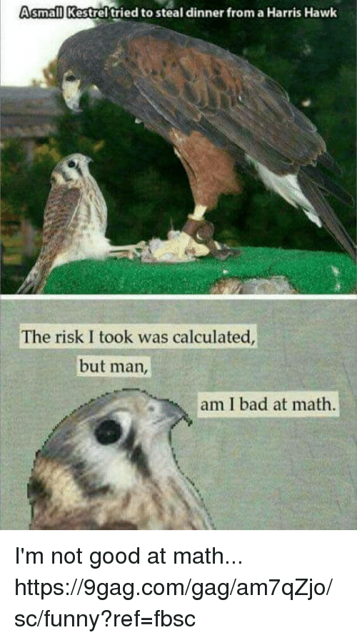 Risk I Took Was Calculated But Man Am I Bad At Math: small Kestrel tried to steal dinner from a Harris Hawk  The risk I took was calculated  but man  am I bad at math I'm not good at math... https://9gag.com/gag/am7qZjo/sc/funny?ref=fbsc