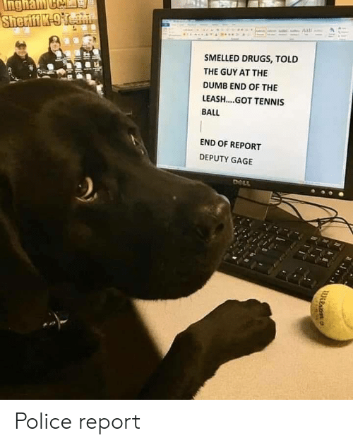The Dumb: SMELLED DRUGS, TOLD  THE GUY AT THE  DUMB END OF THE  LEASH....GOT TENNIS  BALL  END OF REPORT  DEPUTY GAGE Police report
