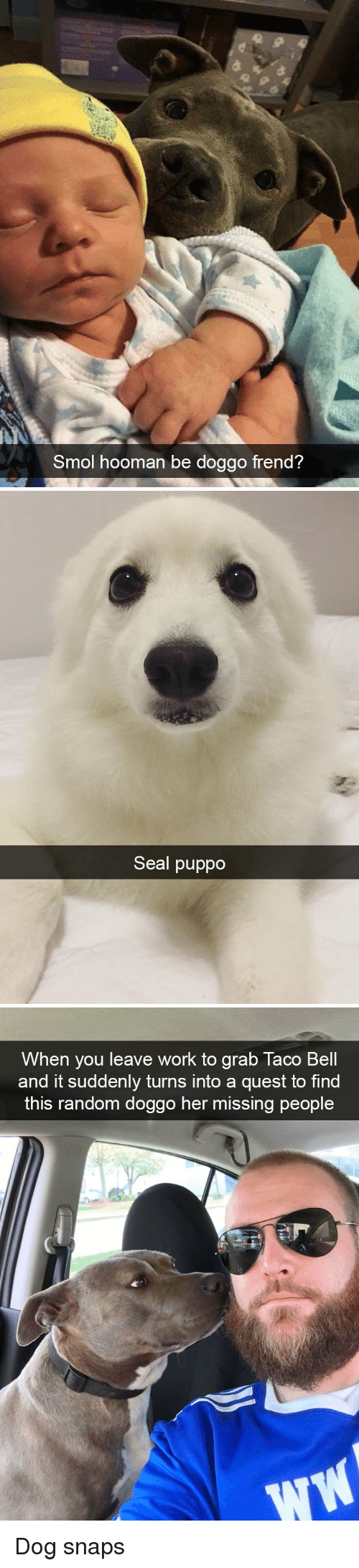 Work, Quest, and Seal: Smol hooman be doggo frend?   Seal puppo   When you leave work to grab laco Bell  and it suddenly turns into a quest to find  this random doggo her missing people  .1 Dog snaps