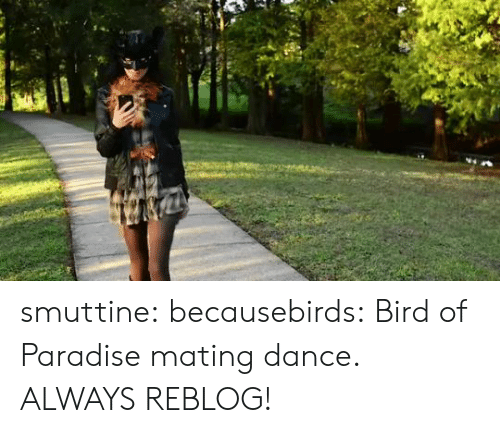 Paradise, Tumblr, and Blog: smuttine: becausebirds: Bird of Paradise mating dance. ALWAYS REBLOG!