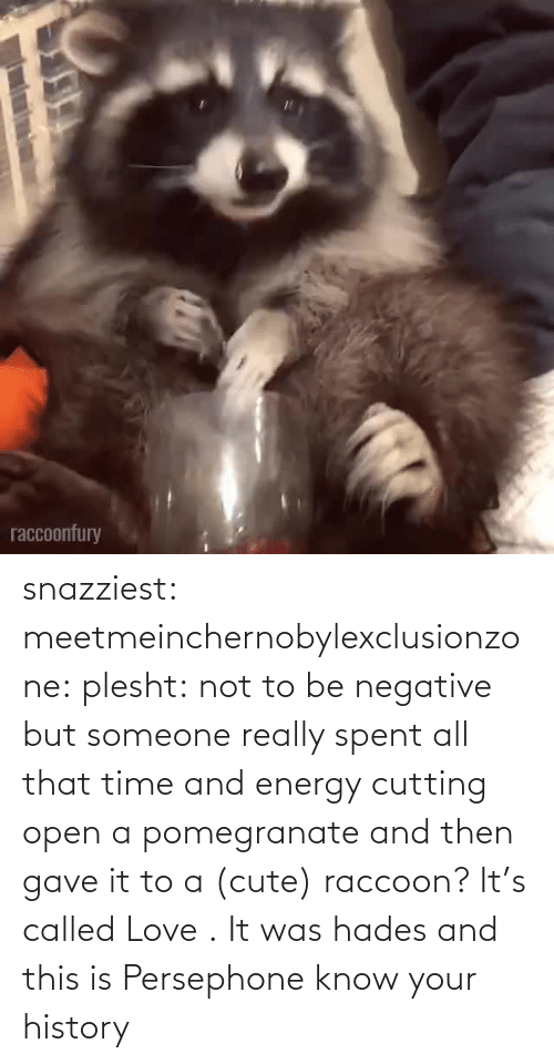 Know Your: snazziest:  meetmeinchernobylexclusionzone:  plesht: not to be negative but someone really spent all that time and energy cutting open a pomegranate and then gave it to a (cute) raccoon? It's called Love .   It was hades and this is Persephone know your history