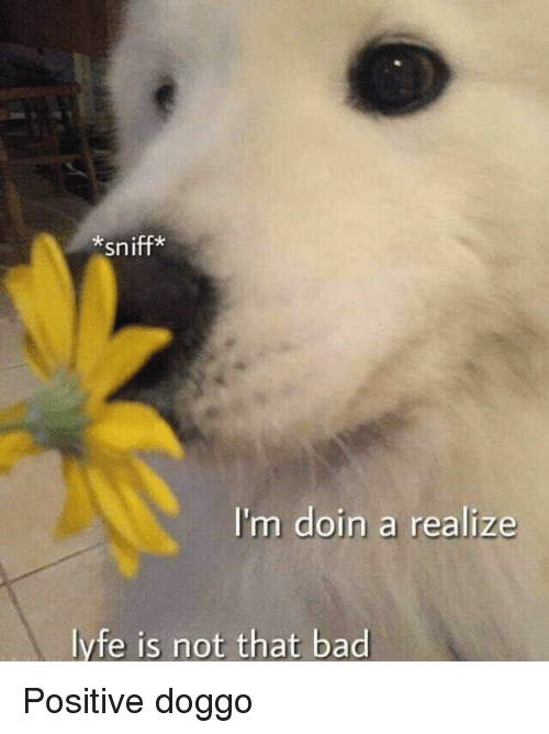 Bad, Doggo, and Realize: *sniff*  I'm doin a realize  lyfe is not that bad Positive doggo