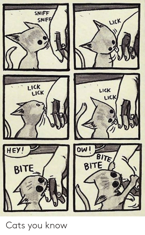 Cats, Owl, and You: SNIFF  SNIF  LICK  LICK  LICK  LICK  LICK  HEY  oWl  BITE  BITE Cats you know