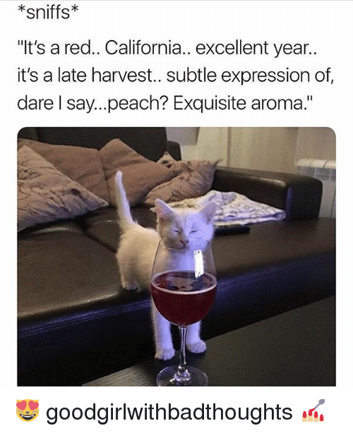 """Memes, California, and 🤖: *sniffs*  """"It's a red.. California.. excellent year..  it's a late harvest.. subtle expression of  dare l say...peach? Exquisite aroma."""" 😻 goodgirlwithbadthoughts 💅🏼"""