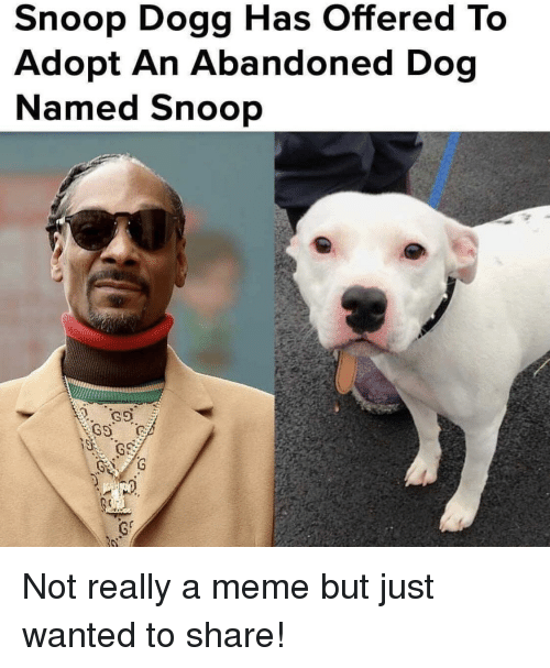 Meme, Snoop, and Snoop Dogg: Snoop Dogg Has Offered To  Adopt An Abandoned Dog  Named Snoop Not really a meme but just wanted to share!