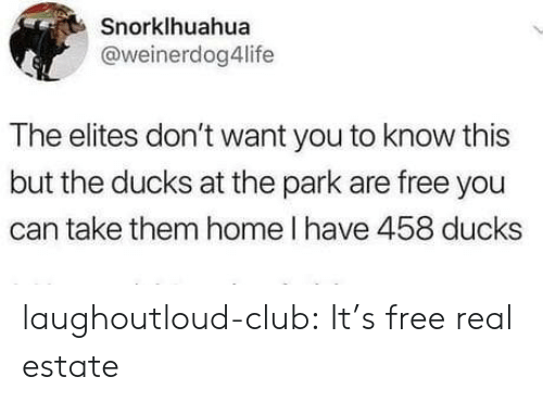 Club, Tumblr, and Blog: Snorklhuahua  @weinerdog4life  The elites don't want you to know this  but the ducks at the park are free you  can take them home l have 458 ducks laughoutloud-club:  It's free real estate